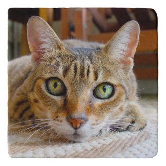 Cute Cat trivet