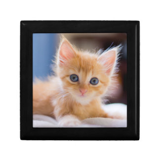 Cute Cat With Blue Eyes Gift Box