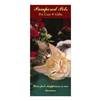 Cute Cats & Kittens Hugging, Kitty Smile, Pet Care Rack Card Design