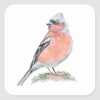 Cute Chaffinch, Watercolor Bird Collection Square Sticker