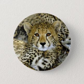 Cute Cheetah 6 Cm Round Badge