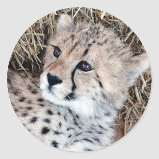 Cute Cheetah Cub Photo Round Sticker