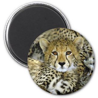 Cute Cheetah Magnet
