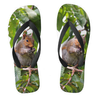 Cute Cherry Picking Eastern Grey Squirrel Flip Flops