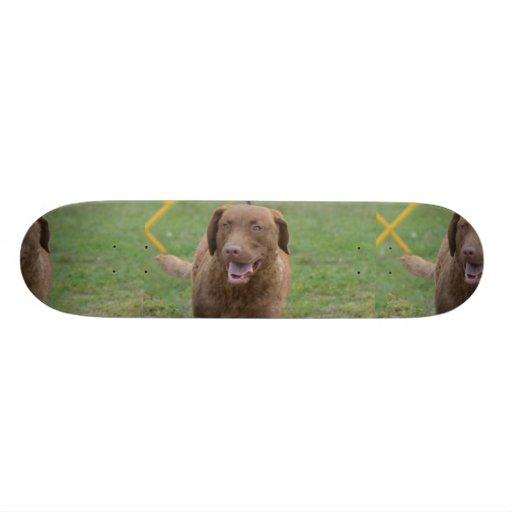 Cute Chesapeake Bay Retriever Skateboards