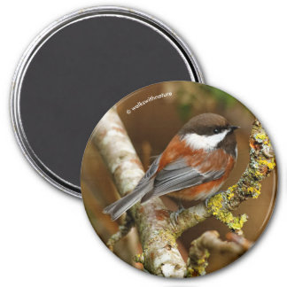 Cute Chestnut-Backed Chickadee on the Pear Tree Magnet
