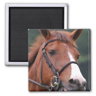Cute Chestnut Horse Magnet Refrigerator Magnets