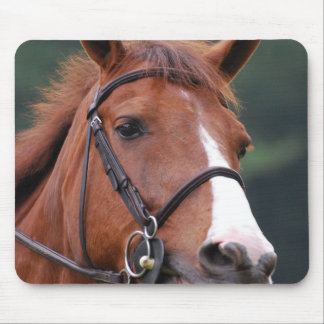 Cute Chestnut Horse Mouse Pad