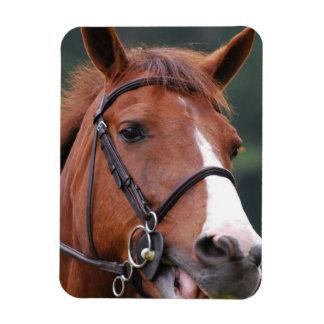 Cute Chestnut Horse Premium Magnet