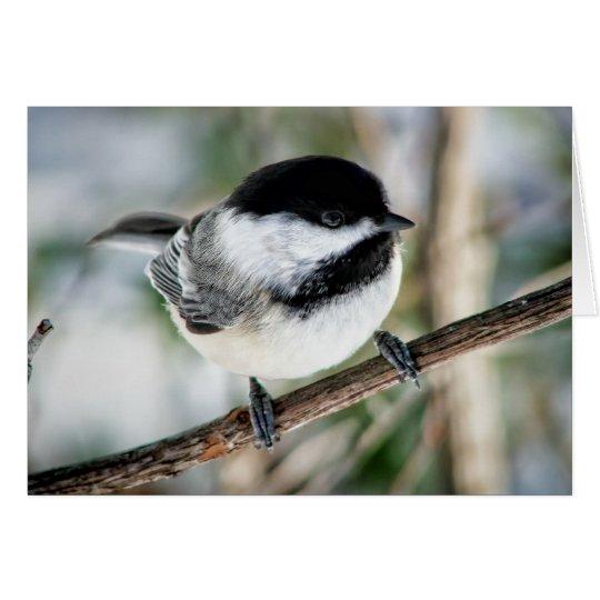 Cute Chickadee in Winter Card