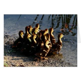 Cute Chicks Greeting Card