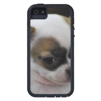 Cute Chihuahua iPhone 5 Case