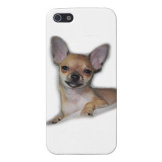 Cute Chihuahua Case Glossy Finish iPhone 5 Cover For iPhone 5/5S