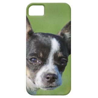 cute chihuahua iphone case iPhone 5 case