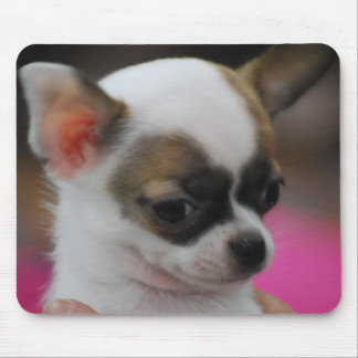Cute Chihuahua  Mouse Pad