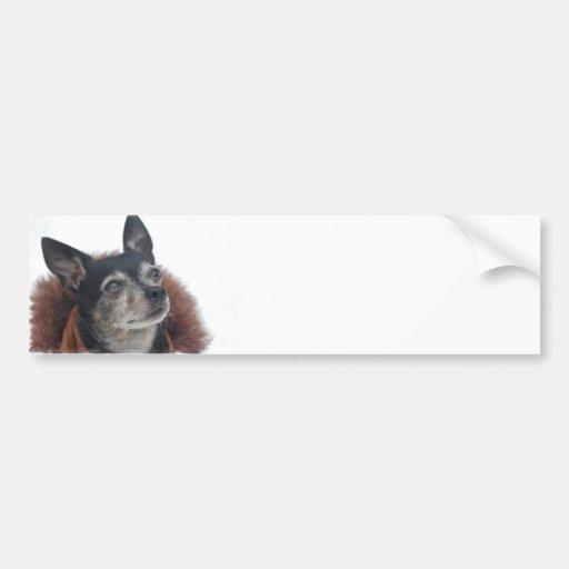 Cute Chihuahua Photos Bumper Sticker