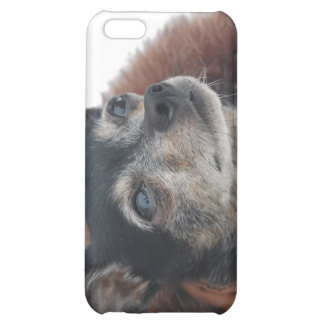 Cute Chihuahua Photos iPhone Case iPhone 5C Covers