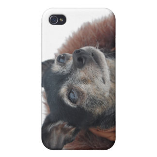 Cute Chihuahua Photos iPhone Case iPhone 4 Cover
