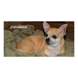 Cute Chihuahua pup photocard Customized Photo Card