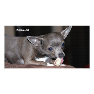 Cute Chihuahua Puppy Picture Card