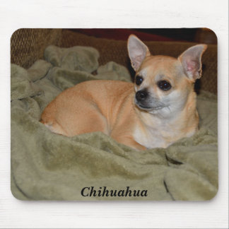 Cute Chihuahua Resting Mouse Pad