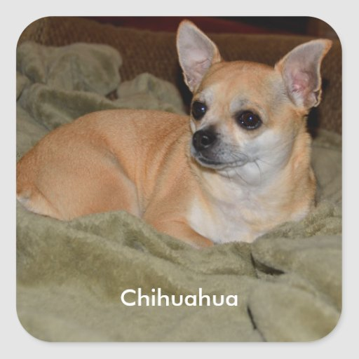 Cute Chihuahua Stickers