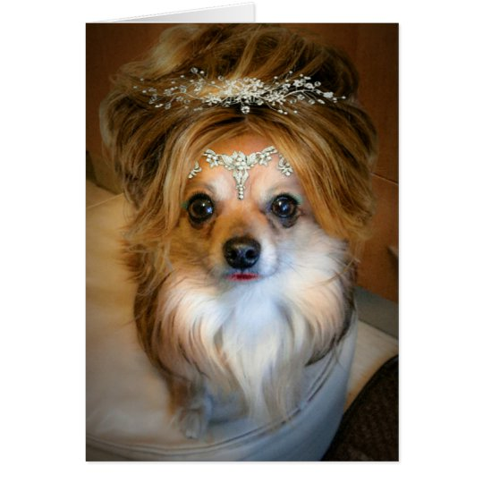 Cute Chihuahua wearing a wig Birthday Card