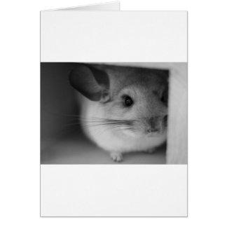 Cute Chinchilla Cards