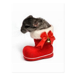 Cute Chinchilla in Christmas Stocking Postcard