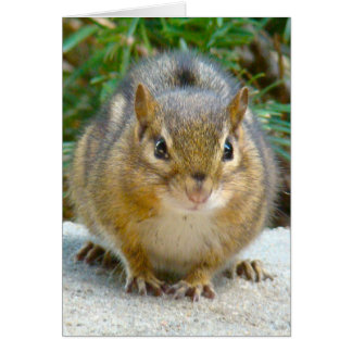 Cute Chipmunk Has His Eye On You Card