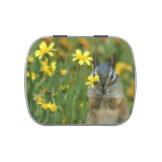 Cute Chipmunk Jelly Bean Gifts Jelly Belly Candy Tin