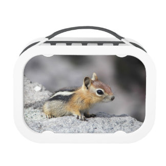 Cute Chipmunk Lunchboxes