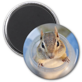 Cute Chipmunk Sitting in a Food Container Magnet