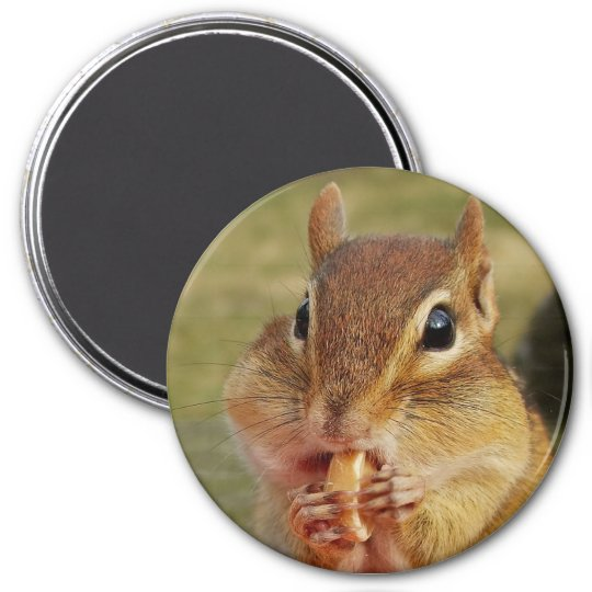 Cute Chipmunk with a Peanut Snack Magnet