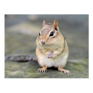 Cute Chipmunk with Bug Friend Postcard