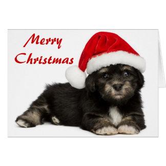 Cute Christmas Havanese Puppy Dog Card