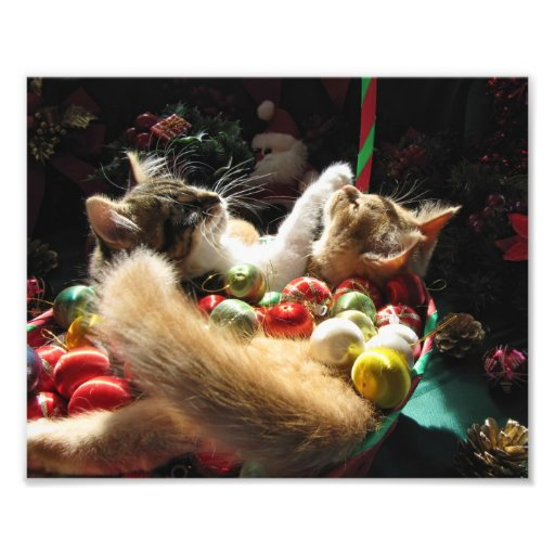 Cute Christmas Kittens in Love on Xmas Eve Photo Print