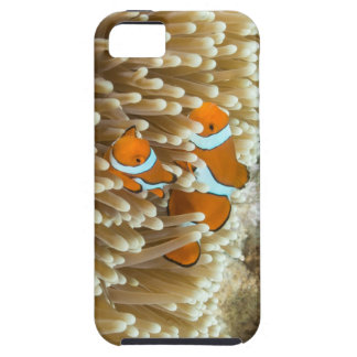 Cute Clown Fish iPhone 5 case