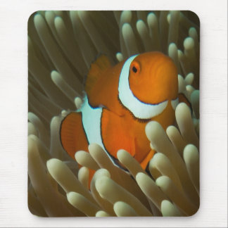 Cute Clownfish Great Barrier Reef Coral Sea Mouse Mat