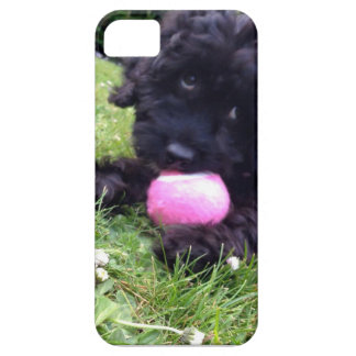 Cute Cockapoo Puppy - iPhone 5 Case