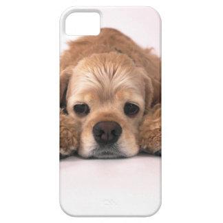 Cute Cocker Spaniel iPhone 5/5S Covers