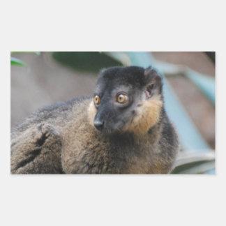 Cute Collared Lemur Rectangle Stickers