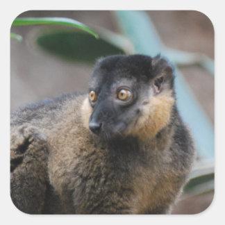 Cute Collared Lemur Sticker