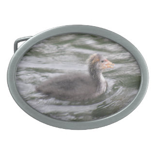 Cute Coot Chick on Choppy Waters Belt Buckle
