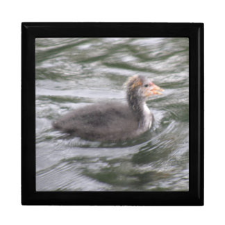 Cute Coot Chick on Choppy Waters Gift Box