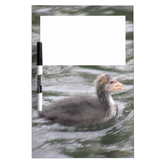 Cute Coot Chick on Choppy Waters Memo Board