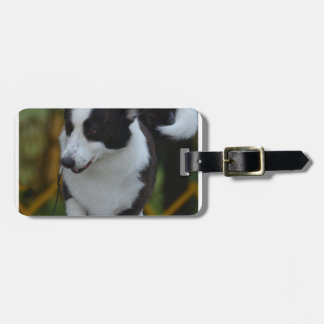 Cute Corgi Luggage Tag