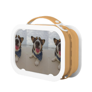 Cute Corgi with Tongue Out Lunch Box