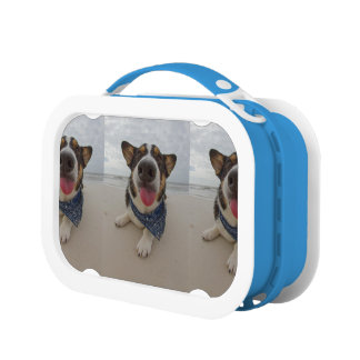 Cute Corgi with Tongue Out Lunch Boxes