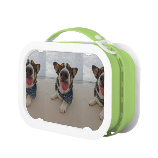 Cute Corgi with Tongue Out Lunchbox